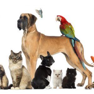 dieren-korting