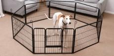 Koop je puppyren of bench online via deze site