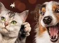 10% korting op honden- en kattenspeelgoed